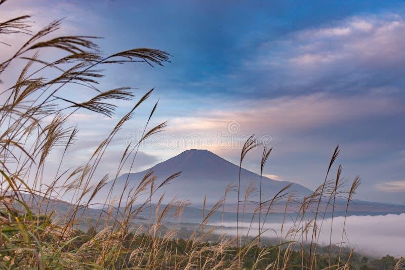 Berg Fuji utan snöräkning dess maximum från en synvinkel runt om Wanakako sjön i en morgon med brunt gräs i förgrund och mi royaltyfria foton