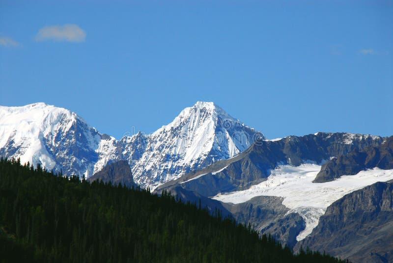 Berg, glaciärer och skog Alaska Wrangell för nationell park- arkivbild