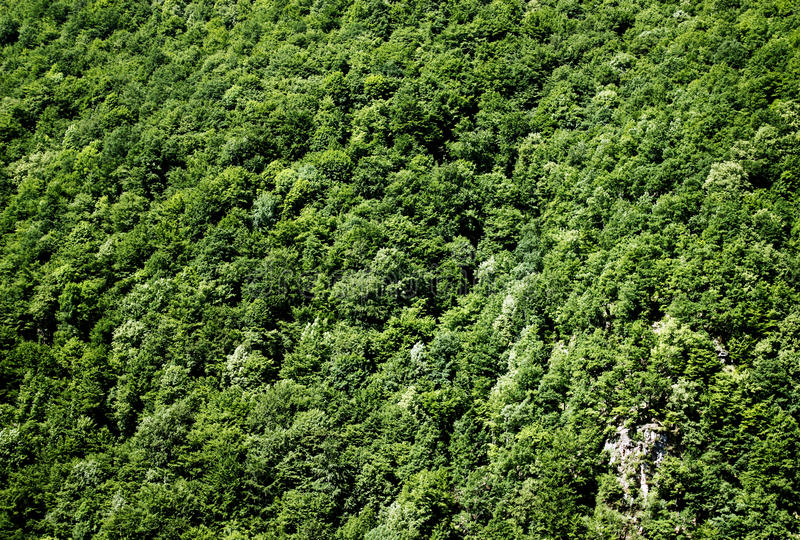 Berg grüßen Waldbeschaffenheitshintergrund stockbild