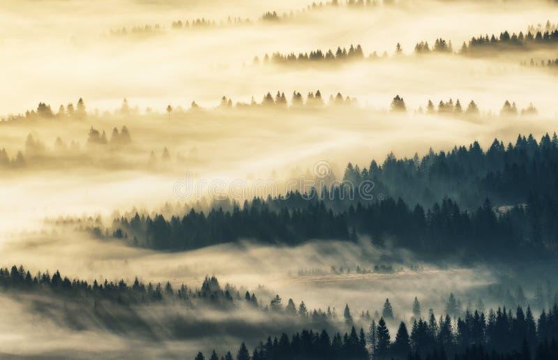 Berg Höstmorgon i de Carpathian bergen dimmig gryning royaltyfria foton