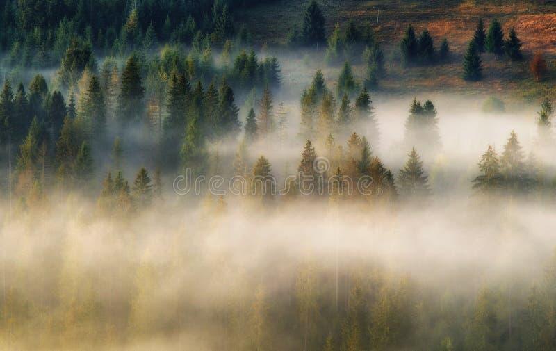 Berg Höstmorgon i de Carpathian bergen dimmig gryning arkivbilder