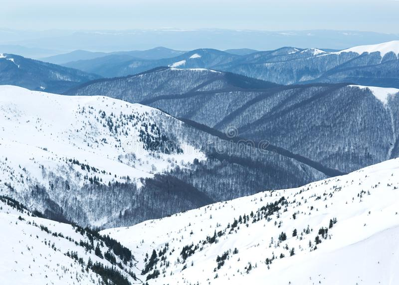Berg i vinter, Carpathians, Ukraina arkivfoton