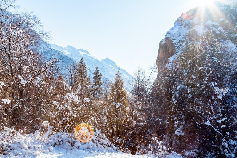 Berg i vinterpanorama royaltyfri bild