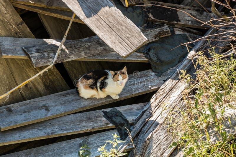 Berg, katt och skog fotografering för bildbyråer