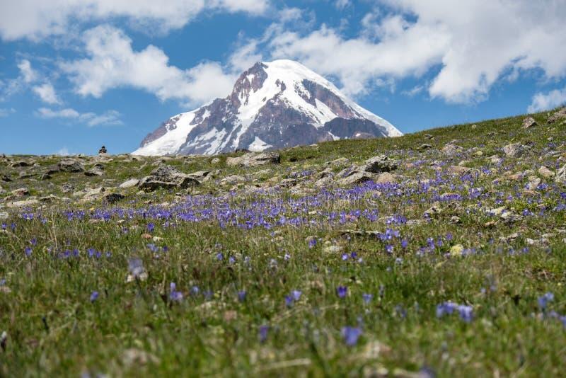 Berg Kazbek op bloemengebied in Georgië stock foto's