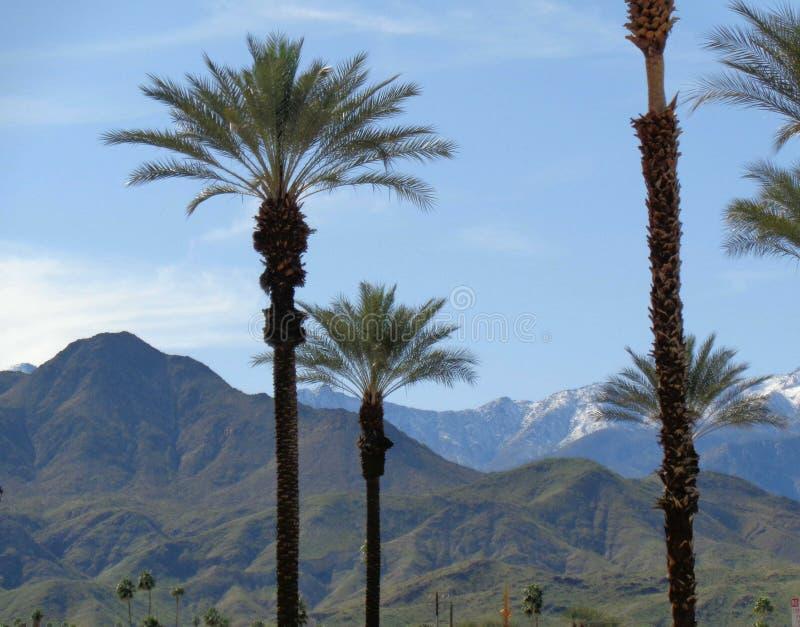 Berg, kullar & palmträd arkivbilder
