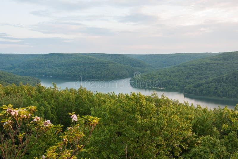 Berg Laurel Above Lake in Pennsylvania stock afbeelding