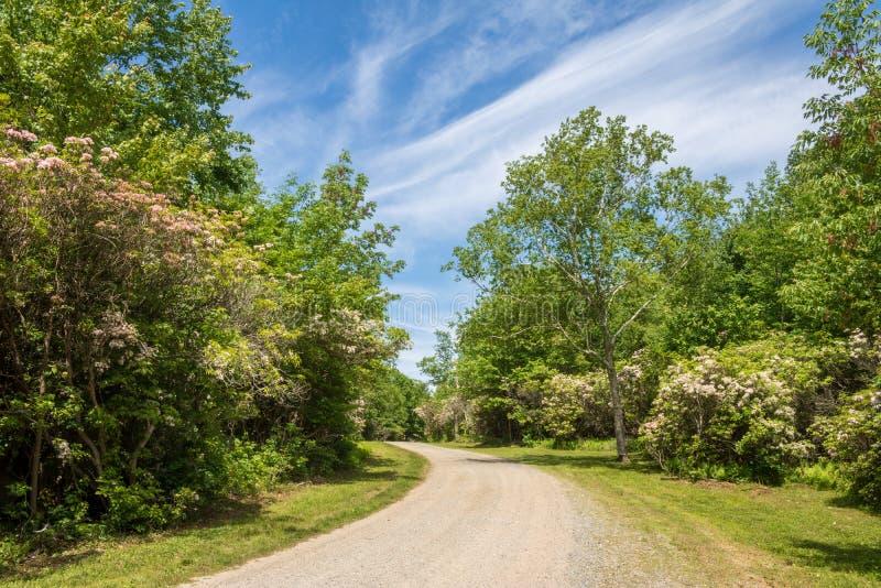 Berg Laurel Sanctuary im Verband, Connecticut stockbilder