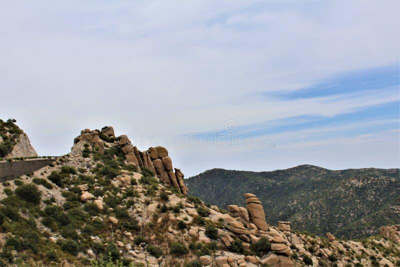 Berg Lemmon, Santa Catalina Mountains, Coronado-staatlicher Wald, Tucson, Arizona, Vereinigte Staaten stockfotografie