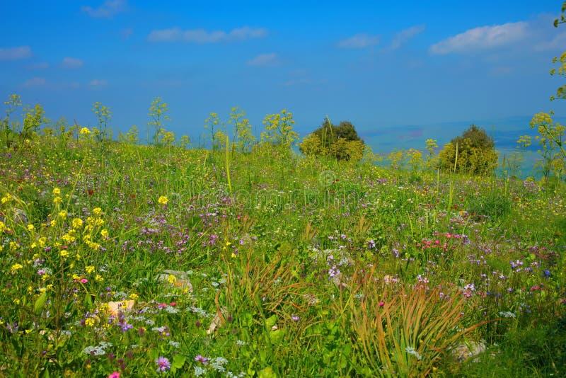 Berg med att blomstra fältet av olika blommor i vår royaltyfria bilder