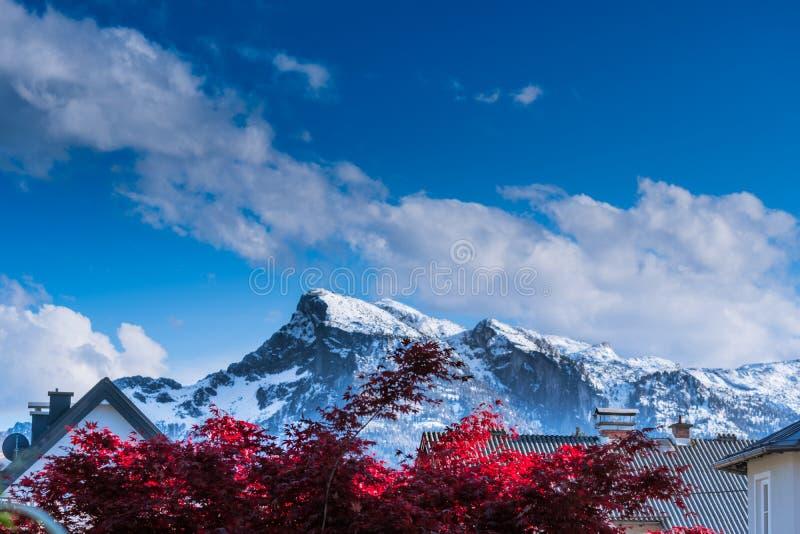 Berg med det röda trädet i förgrund fotografering för bildbyråer