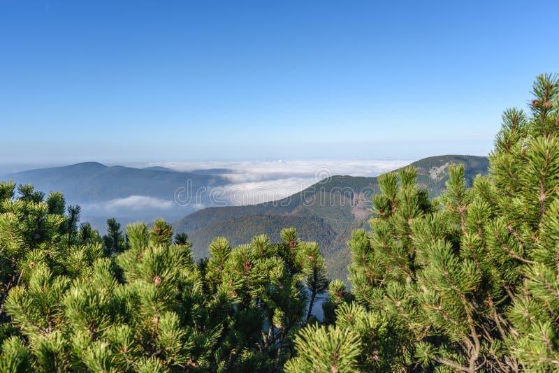 Berg med skogen och dimma arkivbilder
