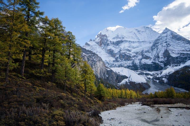 Berg med snö och pinjeskog i hösten som tas i evenien royaltyfri foto