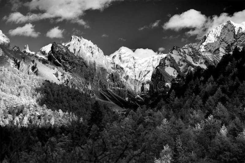 Berg med snö och pinjeskog i svartvitt royaltyfri foto
