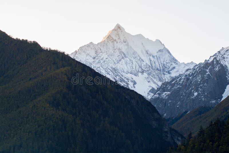 Berg med snö och pinjeskog i vit bakgrund som in tas royaltyfri fotografi