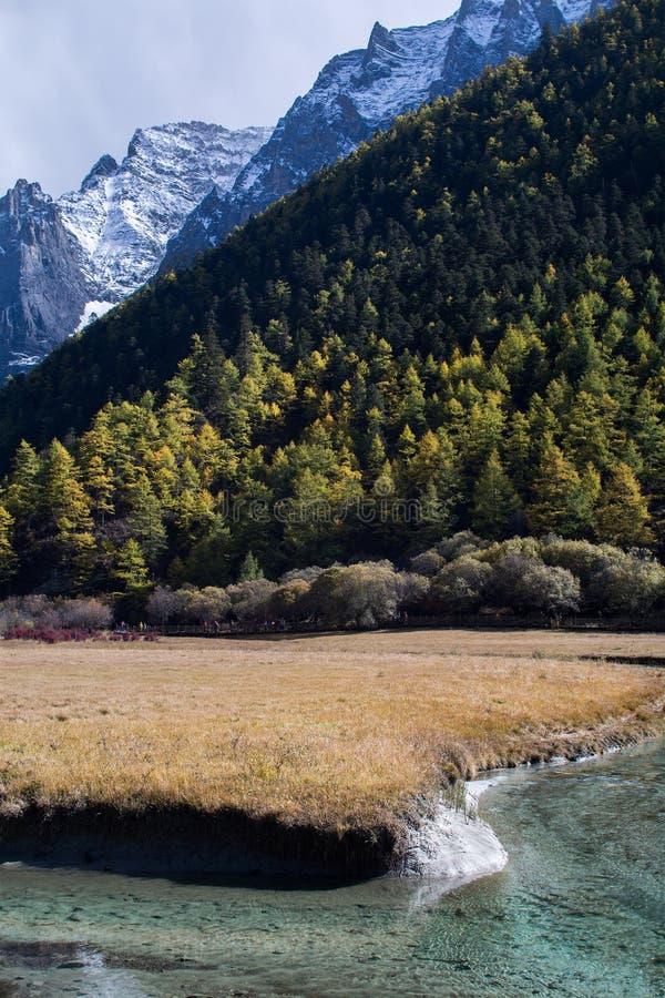 Berg med snö, pinjeskogen och bäcken royaltyfria foton