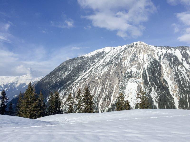 Berg med träd och snö royaltyfri foto