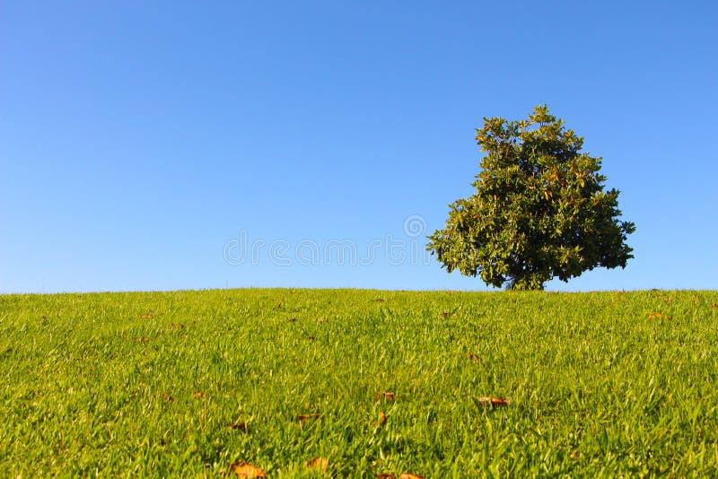 Berg met een boom en een blauwe hemel royalty-vrije stock fotografie