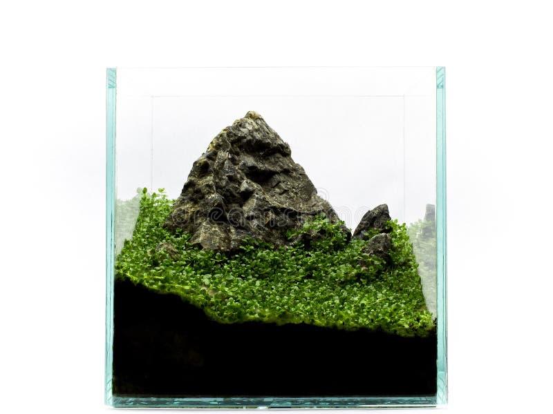Berg in miniatuur in aquarium, met installaties royalty-vrije stock afbeeldingen