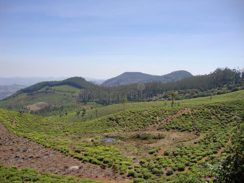 Berg mit dem Grün lizenzfreie stockfotos