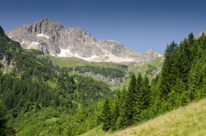 Berg mit Felsen und Tannen stockbild