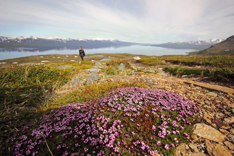 Berg mit wilden Blumen lizenzfreies stockfoto