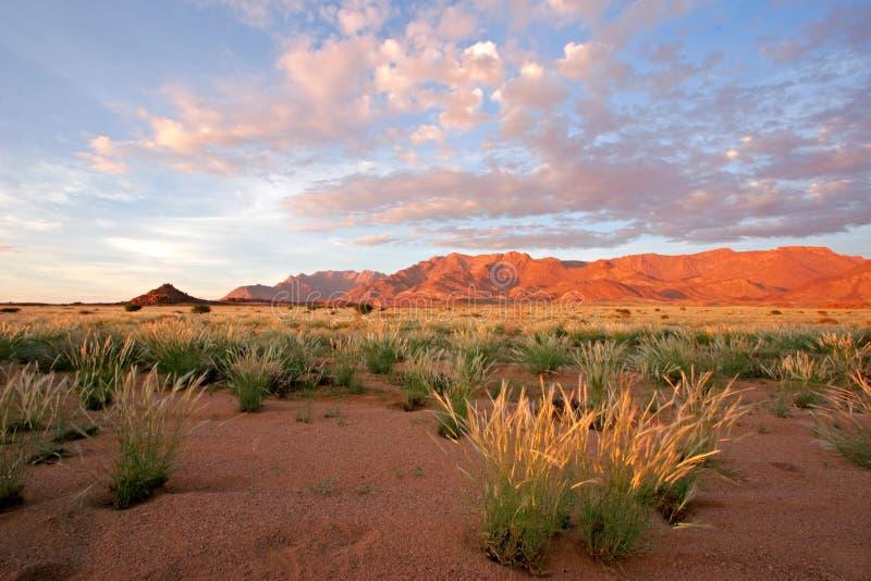 berg namibia för brandberggrässlättliggande royaltyfri bild