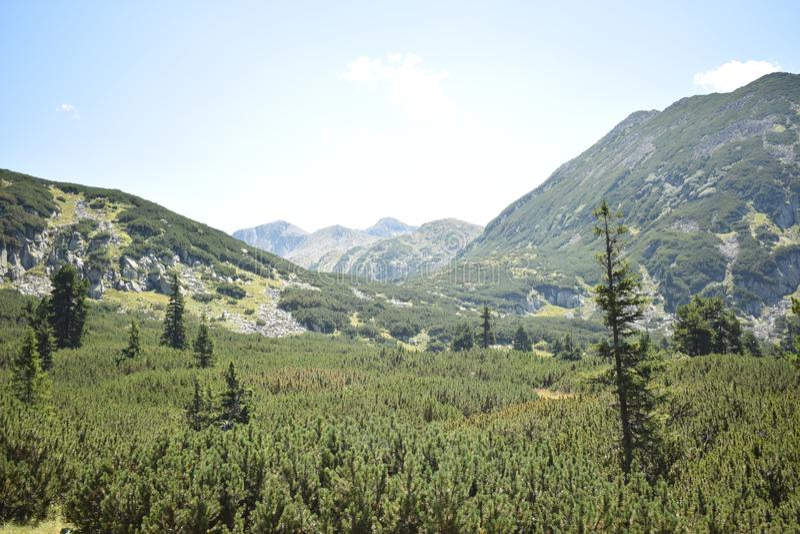 Berg och grön skog royaltyfri fotografi