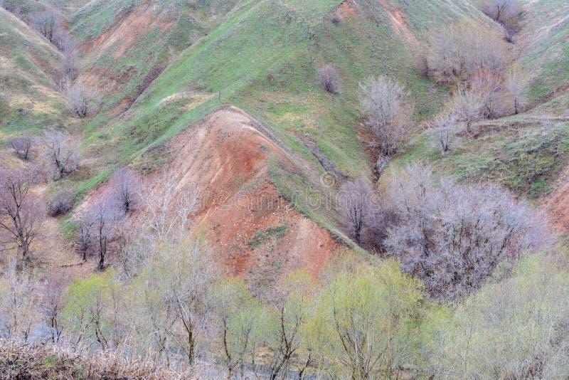 Berg och kullar på kusten av floden Volga Härliga modeller av vaggar, ängar, grönt gräs och träd h?rligt vatten f?r blommafj?ders royaltyfri fotografi