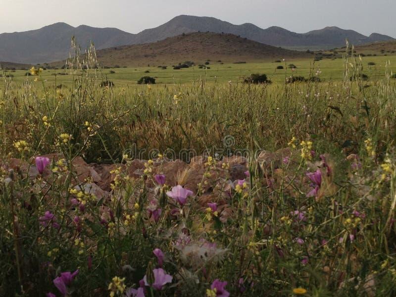 Berg och natur arkivbild
