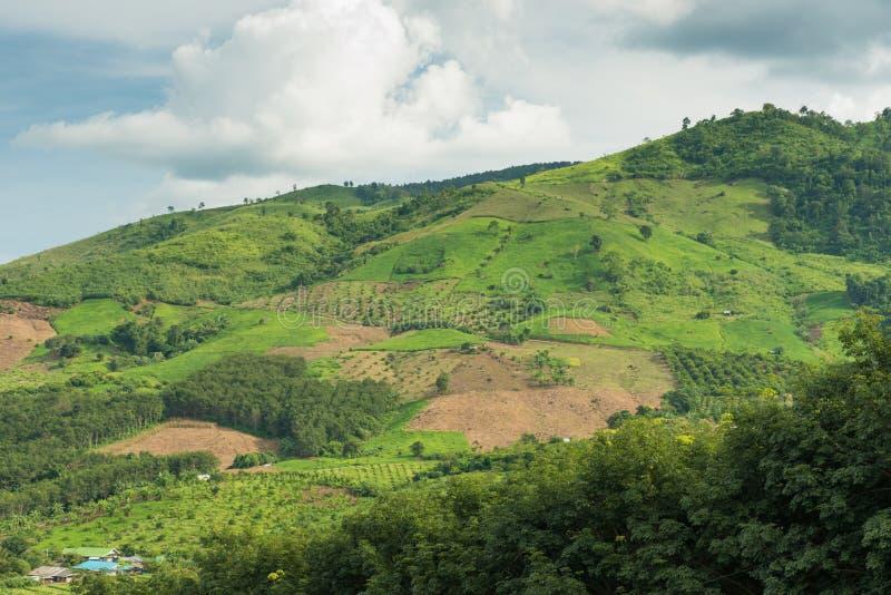 Berg och risfält med vägen och härlig himmel royaltyfria bilder