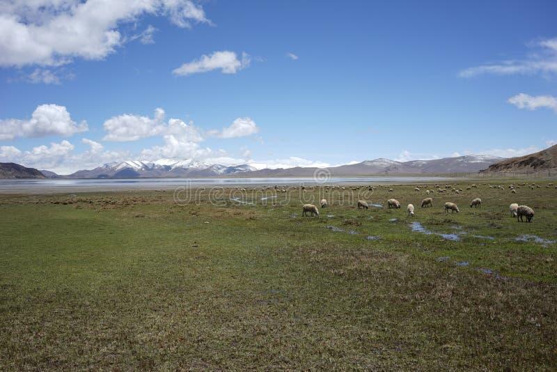 Berg och sjö i Tibet royaltyfria bilder