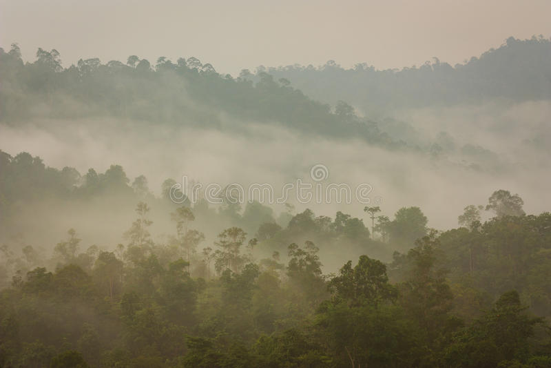 Berg och tropisk djungel under mist royaltyfri fotografi