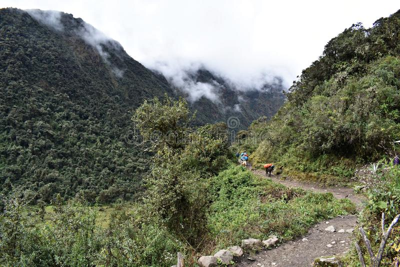 Berg på den Salkantay treken i Peru, vägen till Machu Picchu royaltyfria bilder