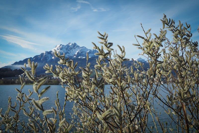 Berg pilatus See lucern lizenzfreies stockfoto