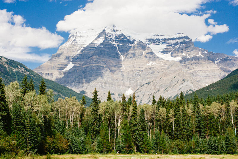 Berg Robson, der über immergrünen Wald hochragt stockfotos