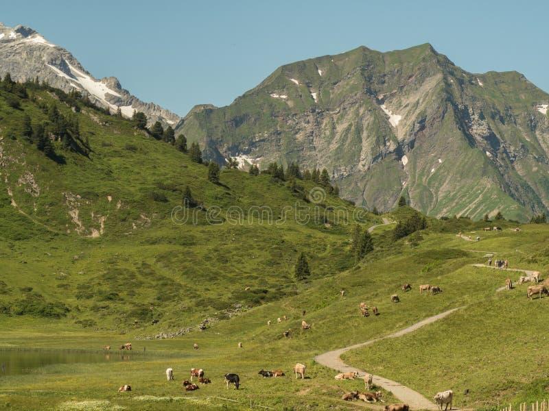 Berg runt om byn Schroecken arkivbilder