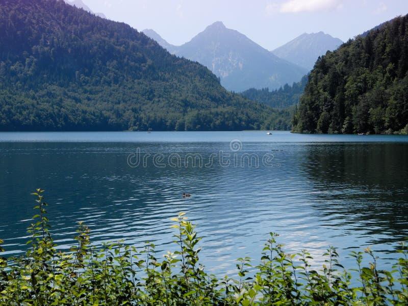 Berg sjö Alpsee med kulört rent djupt vatten för turkos Rökiga purpurfärgade berg på horisont royaltyfria bilder