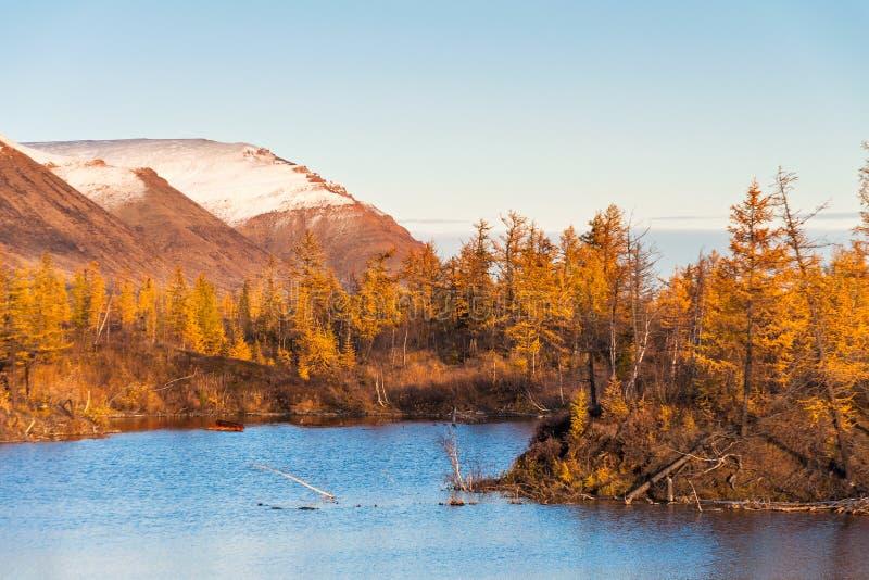 Berg sjö i tundran, djup höst i den Taimyr halvön nära Norilsk arkivbilder