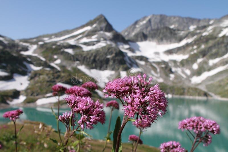 Berg sjö och blommor i apls, Österrike arkivbilder