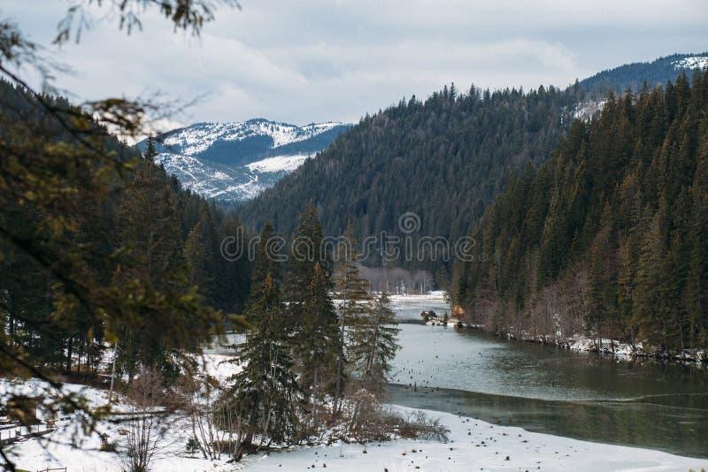Berg sjölandskap, Lacu Rosu eller röd sjö och bicazflod i molnigt, regnväder, östliga Carpathians, Rumänien royaltyfri bild