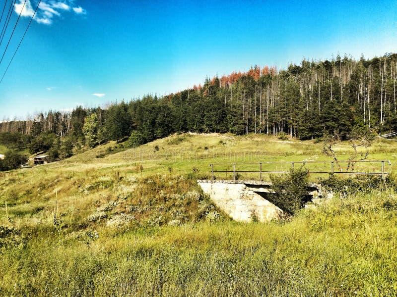 Berg skog, landskap arkivbilder