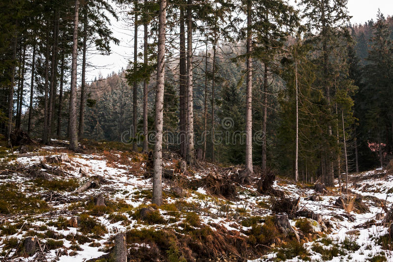 Berg in Slowakije, Hoge Tatras stock afbeeldingen