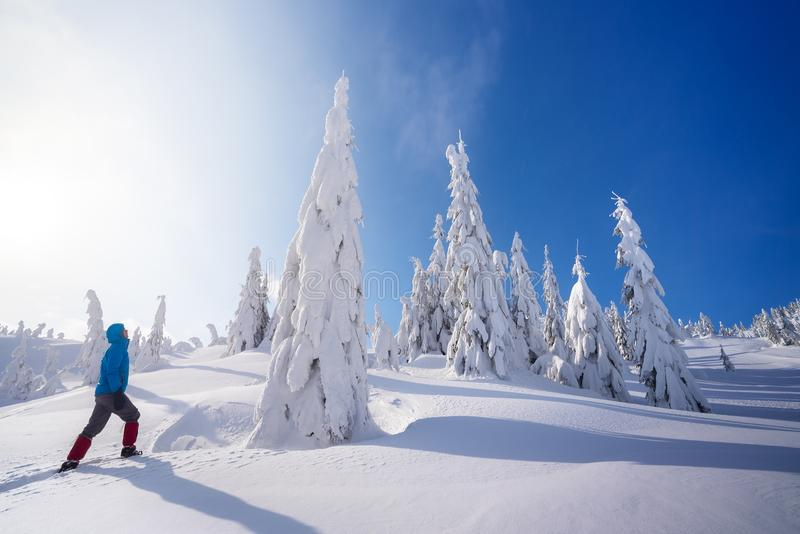 Berg som fotvandrar i vintern royaltyfri bild