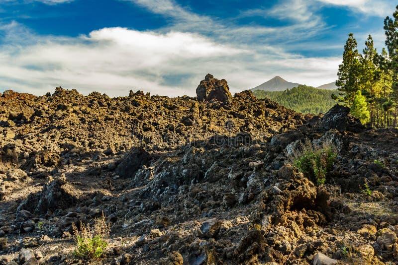 Berg Teide, door de wolken gedeeltelijk wordt behandeld die Heldere blauwe hemel boven de van de pijnboombos en lava rotsen Het N stock foto