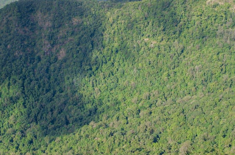 Berg und Wald lizenzfreie stockfotografie