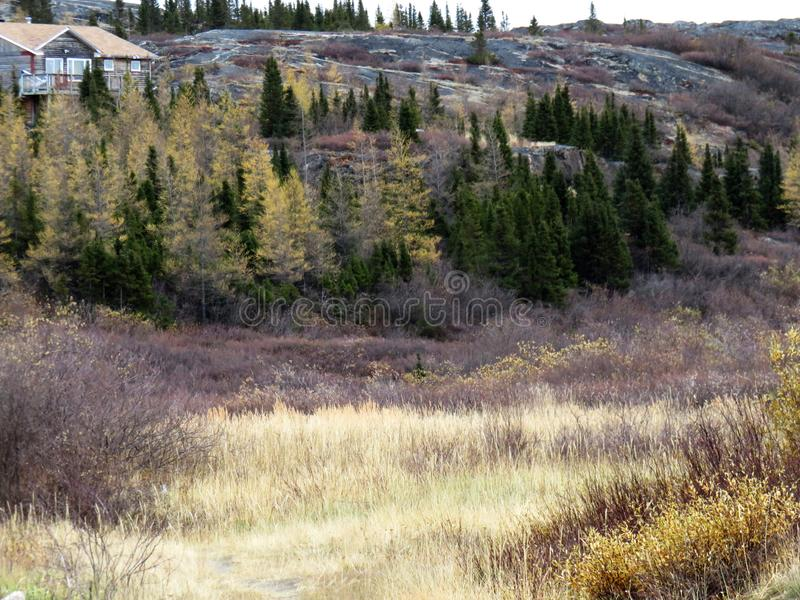 Berg van pijnboom en beukbomen met tegenover elkaar stellende kleuren wordt behandeld die stock afbeeldingen