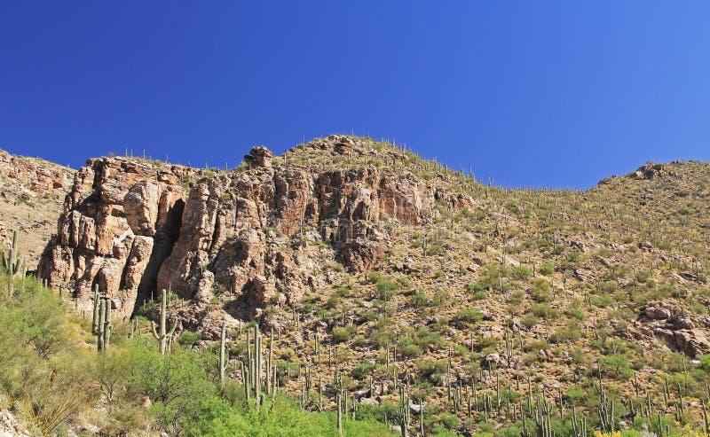 Berg van Saguaro op Onderstel Lemmon in Tucson Arizona stock foto