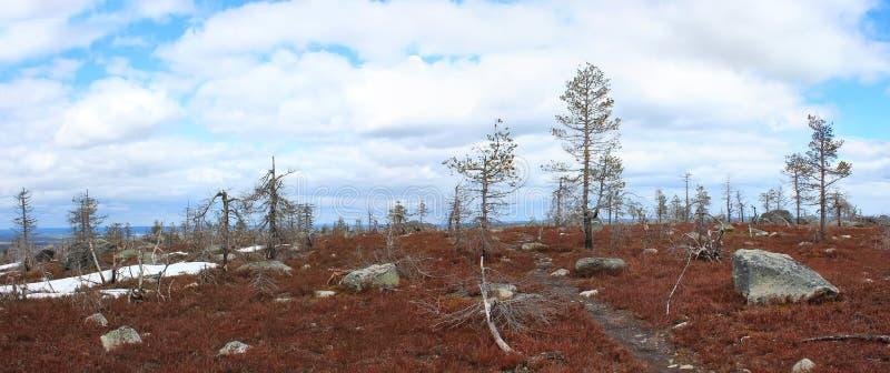 Berg Vottovaara, Karelia, Ryssland arkivfoto