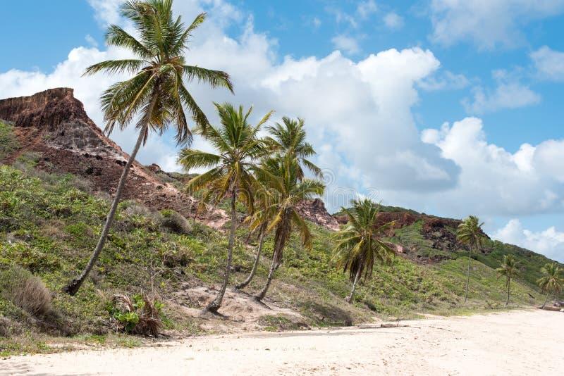 Bergachtig strand met palmen stock afbeelding